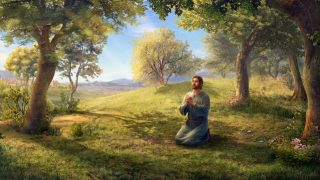 聖經金句:安慰